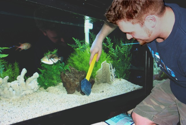 Clean-Your-Fish-Tank